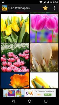 Tulips Flowers HD Wallpapers apk screenshot