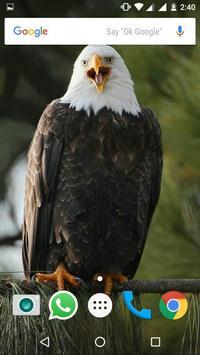 Bald Eagle HD Wallpaper apk screenshot