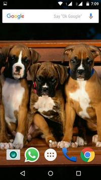 Boxer  Dog HD Wallpaper apk screenshot