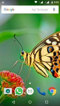 Butterfly Wallpapers HD screenshot 3