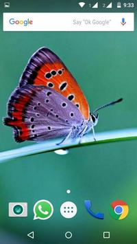 Butterfly Wallpapers HD screenshot 5