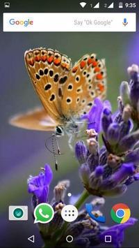 Butterfly Wallpapers HD screenshot 7