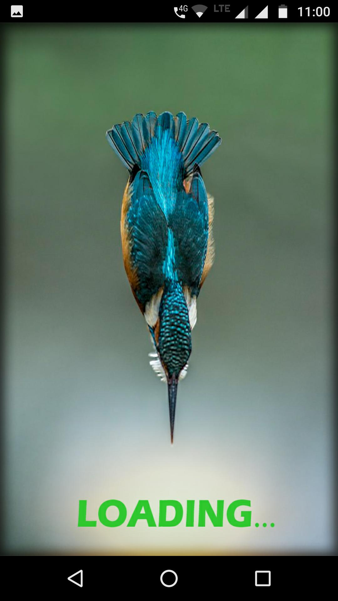 Kingfisher Bird Wallpaper Hd For Android Apk Download