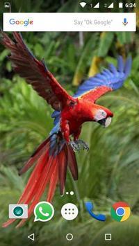 Macaw Parrot Bird HD Wallpaper screenshot 1