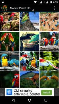 Macaw Parrot Bird HD Wallpaper screenshot 2