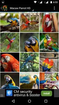 Macaw Parrot Bird HD Wallpaper screenshot 6