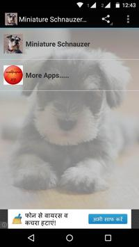 Miniature Schnauzer Dog HD poster