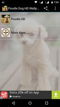 Poodle Dog HD Wallpaper screenshot 8