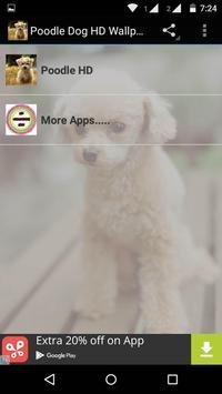 Poodle Dog HD Wallpaper poster