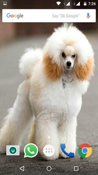 Poodle Dog HD Wallpaper screenshot 1