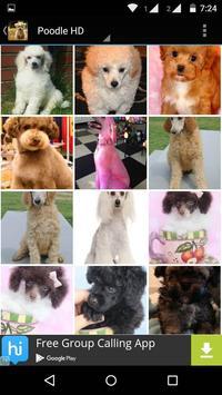 Poodle Dog HD Wallpaper apk screenshot