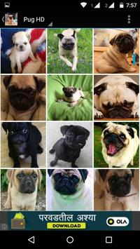 Pug Dog HD Wallpaper screenshot 4