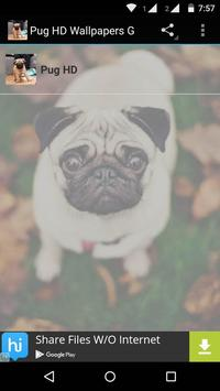 Pug Dog HD Wallpaper poster