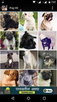 Pug Dog HD Wallpaper screenshot 2