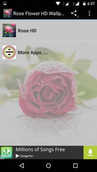 Rose Flower HD Wallpapers poster