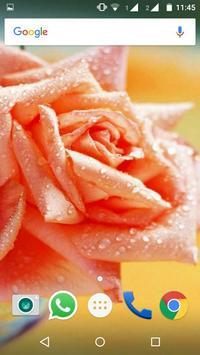 Rose Flower HD Wallpapers apk screenshot