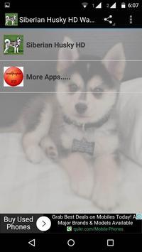 Siberian Husky Dog Wallpapers poster