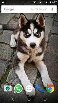 Siberian Husky Dog Wallpapers apk screenshot