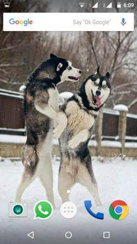 Siberian Husky Dog Wallpapers screenshot 19