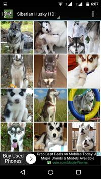Siberian Husky Dog Wallpapers screenshot 2