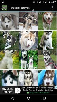 Siberian Husky Dog Wallpapers screenshot 4