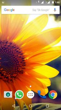 Sunflower Wallpaper HD screenshot 9