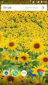 Sunflower Wallpaper HD screenshot 13