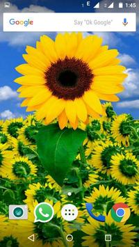 Sunflower Wallpaper HD screenshot 3