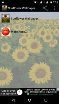 Sunflower Wallpaper HD poster