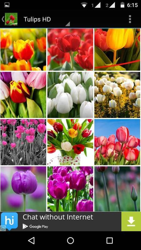 ... Tulips Flowers Wallpapers HD apk screenshot ...