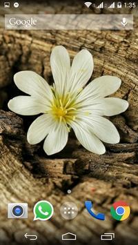Beautiful Flower HD Wallpapers apk screenshot
