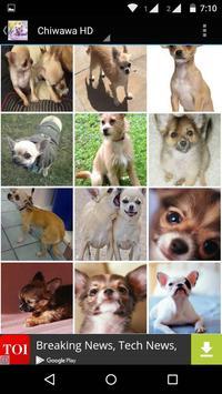 Chiwawa Dog HD Wallpaper screenshot 2