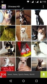 Chiwawa Dog HD Wallpaper screenshot 4