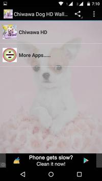 Chiwawa Dog HD Wallpaper poster