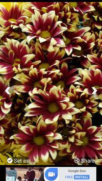 Flowers Wallpapers HD screenshot 8