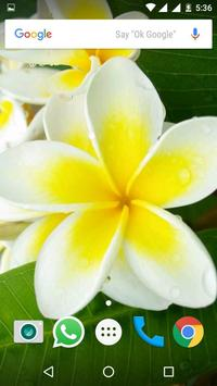 Plumeria Flower HD Wallpapers screenshot 1