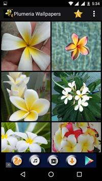 Plumeria Flower HD Wallpapers screenshot 2