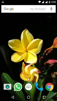 Plumeria Flower HD Wallpapers screenshot 3
