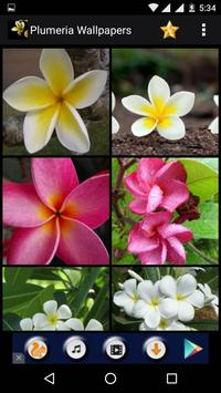 Plumeria Flower HD Wallpapers screenshot 4