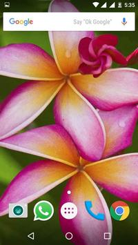 Plumeria Flower HD Wallpapers screenshot 7