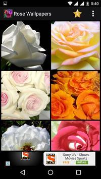 Rose HD Wallpapers apk screenshot
