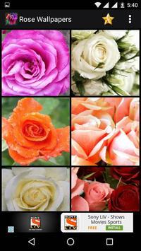 Rose HD Wallpapers screenshot 2