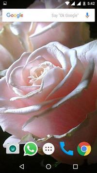 Rose HD Wallpapers screenshot 7