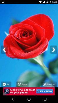 Rose HD Wallpapers screenshot 4