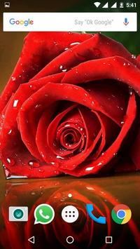 Rose HD Wallpapers screenshot 9
