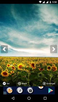 Sunflower HD Wallpaper apk screenshot