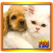 Matching Dogs And Cats icon