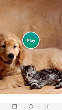 Matching Dogs And Cats poster