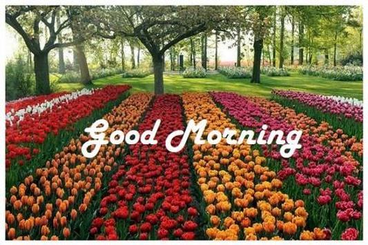 Good Morning Greetings poster