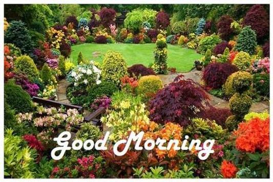 Good Morning Greetings screenshot 1